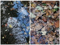 nature-site-web-L.Moser-2019-croped-7