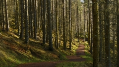 Scottish-forest--L.Moser_